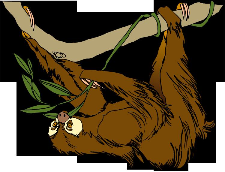 Clip Art Sloth Clipart sloth clipart kid free clipart