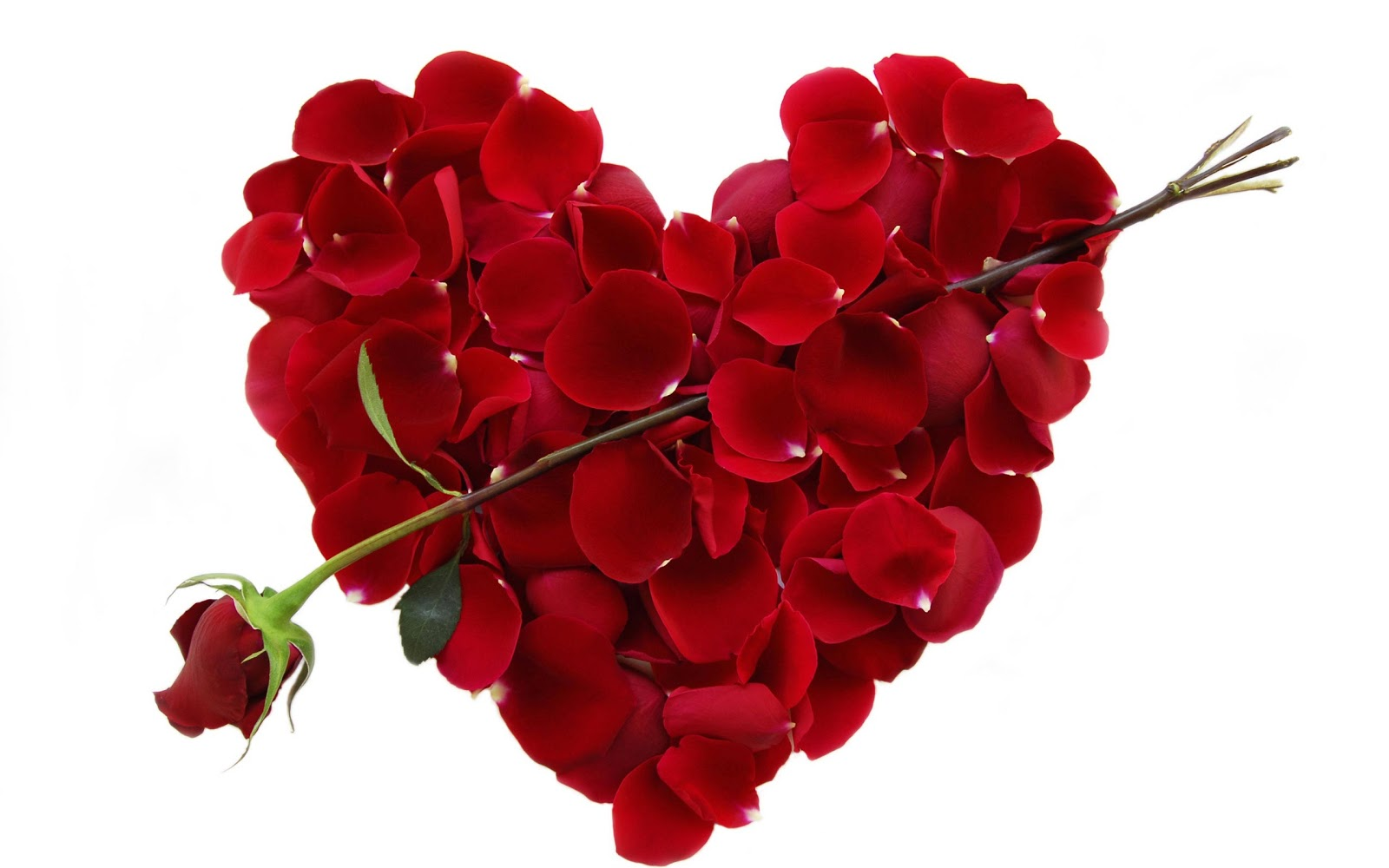 Roses Will Be Saying I Love You On Valentine S Day If Only The Poet