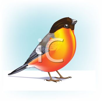 Royalty Free Clipart Image Of A Robin   Spring   Pinterest