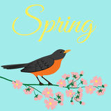 Spring Robin Stock Vectors Illustrations   Clipart
