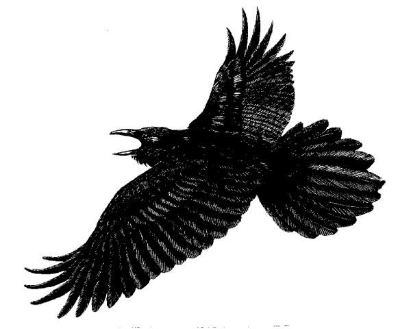 Flying crow clip art
