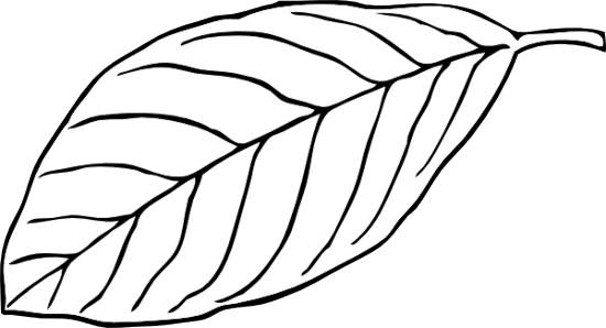 Black and white leaf clipart clipart suggest - Leaves paintings and drawings ...