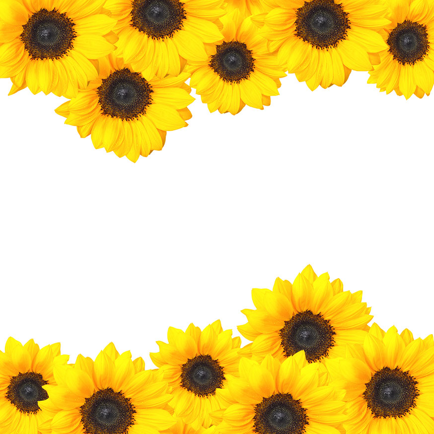 Sunflower Border Design Sunflower Border Design Jpg