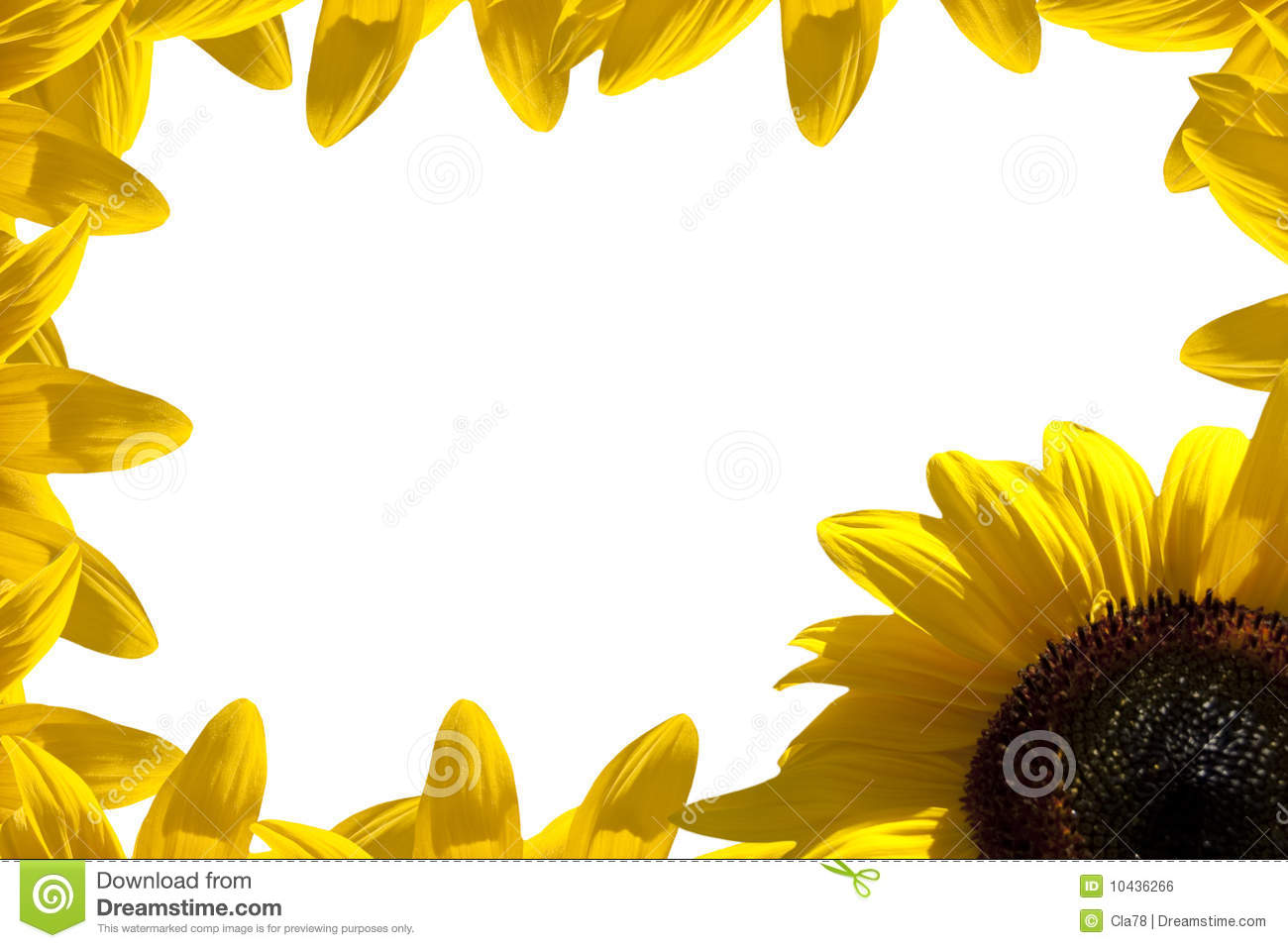 Sunflower Border Royalty Free Stock Image   Image  10436266
