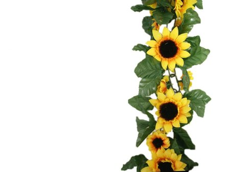 Sunflower Border Wallpaper   Flowers   Nature Background