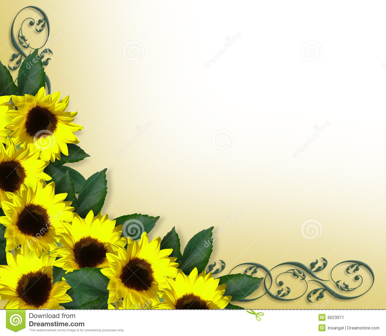 Sunflowers Border Yellow Spring Stock Image   Image  6623971