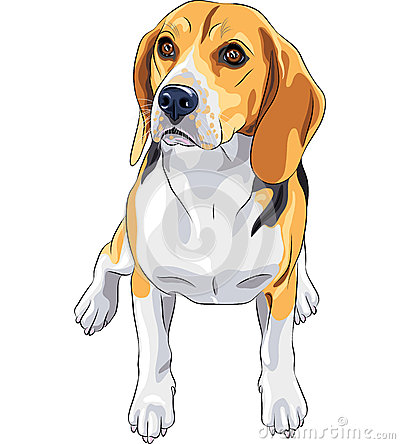 Beagle Clipart Bnp Design