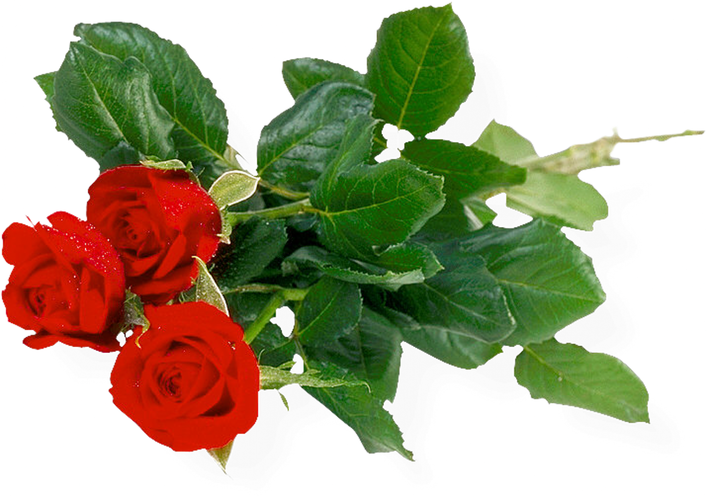 Bouquet Of Roses Png Image Free Picture Download   Bouquet Of Roses