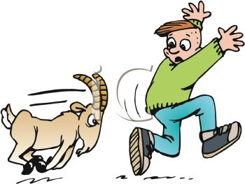 Growing Learned Young Turn Goats Ram Everytime Ramming Goat Animated Ftx Clipart