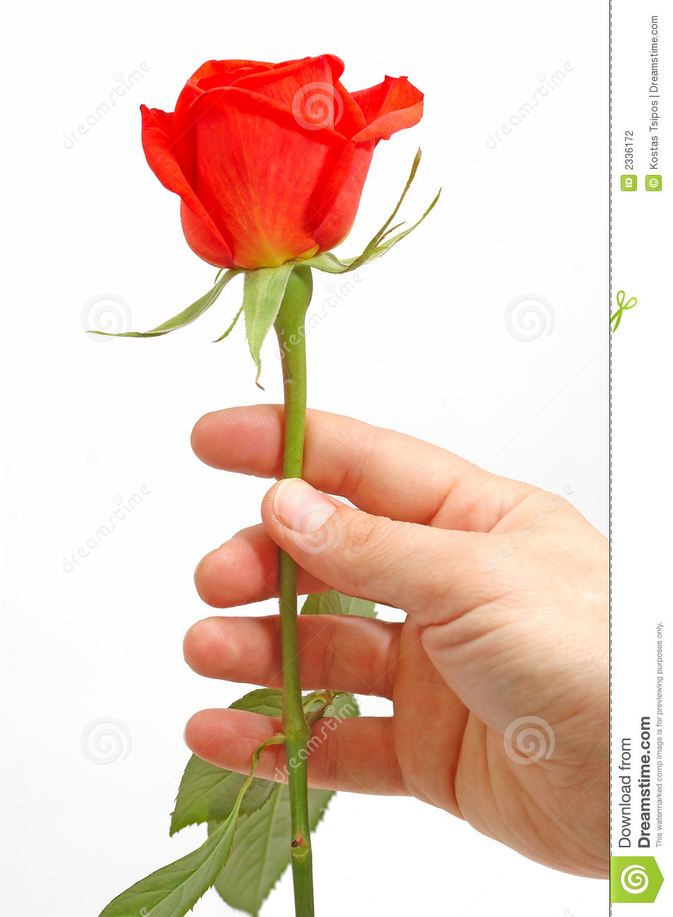 Hand Holding A Red Rose Stock Photography   Image  2336172