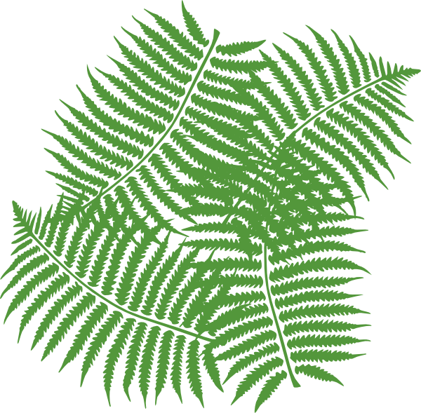 Clip Art Fern Clipart fern clipart kid four leaves clip art at clker com vector online