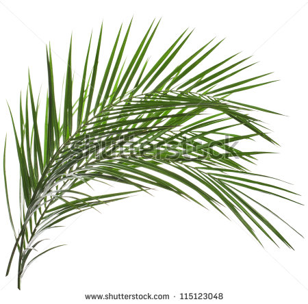 Go Back   Gallery For   Palm Leaves Clipart