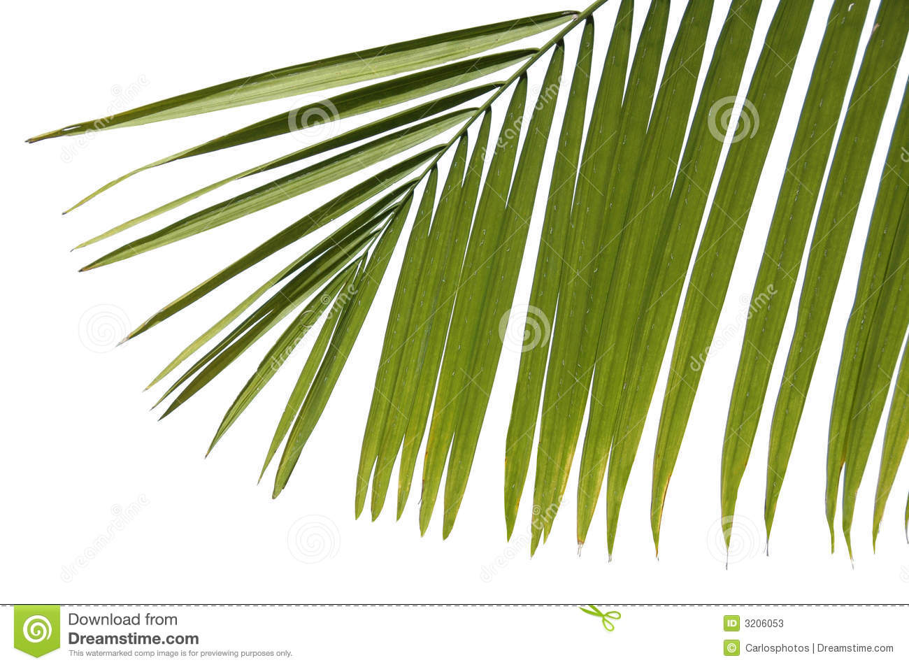 Palm Leaves Clipart  Palm Tree Clip Art  Palm Tree Leaves Template
