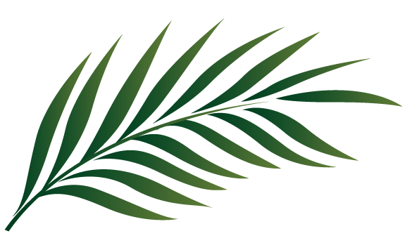 Palm Leaves Clipart - Clipart Kid