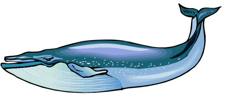 Blue Whale Clip Art Whale Watching