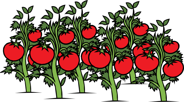 Clearer Tomato Patch Clip Art At Clker Com   Vector Clip Art Online