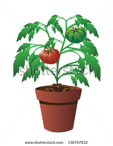 Tomato plants clipart