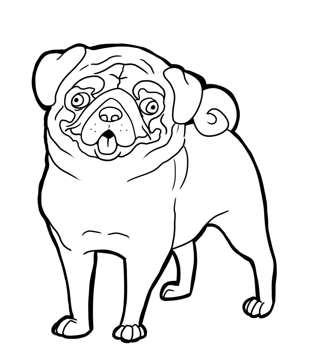 Pug Clip Art Clipart Best #lKOFMs - Clipart Kid