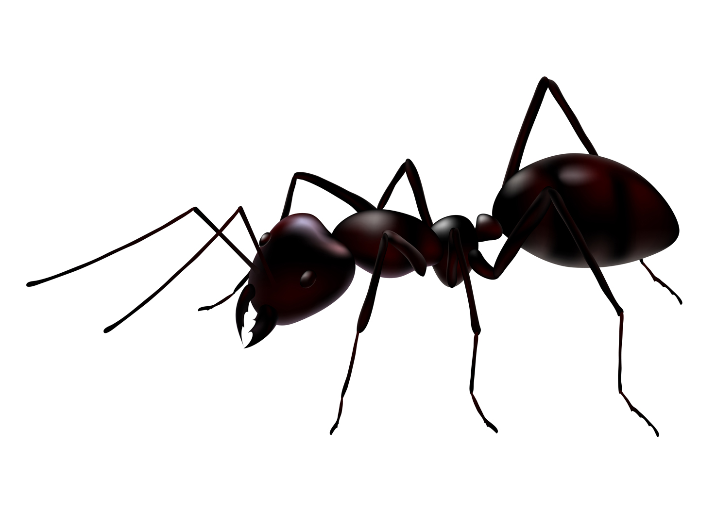 Ants   Pictures Diet Breeding Life Cycle Facts Habitat Behavior