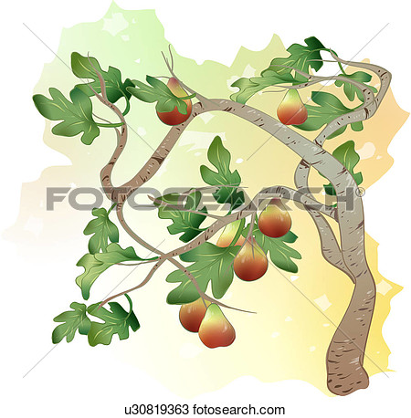 Clipart   Plants Tree Fig Fruit Fig Tree Trees Plant  Fotosearch
