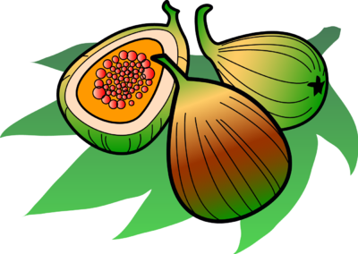 Fig Clipart Images   Pictures   Becuo