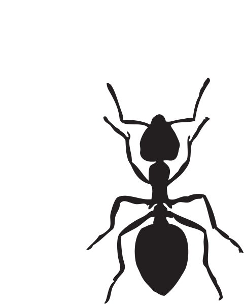 File Ant Clipart Svg