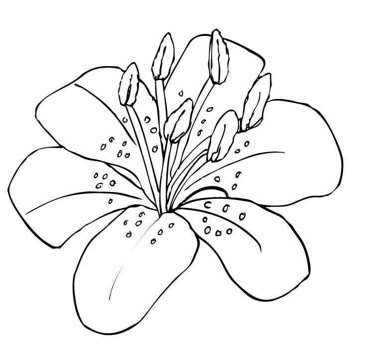 Tiger Lily Clipart - Clipart Suggest