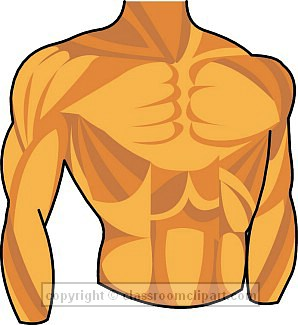 Human Chest Clipart