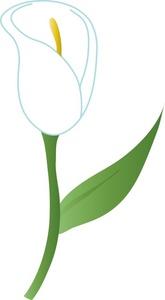 Clip Art Lily Clip Art calla lily clipart kid image a white lily