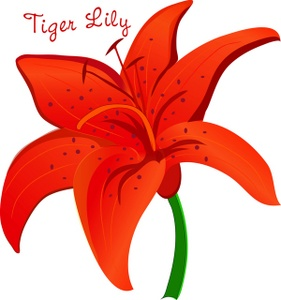 Tiger Lily Clipart Image   Pretty Orange Tiger Lily Flower With The