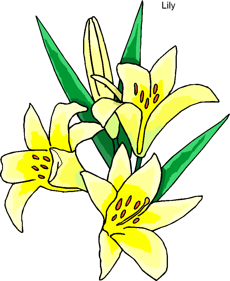 Yellow Lily Flower Clipart