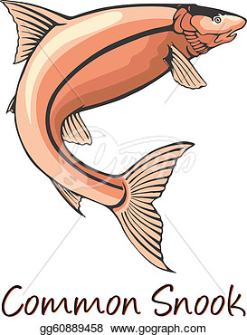 Common Snook Color Illustration  Stock Clipart Gg60889458