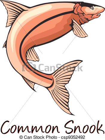 Of Common Snook Color Illustration Csp9352492   Search Clipart