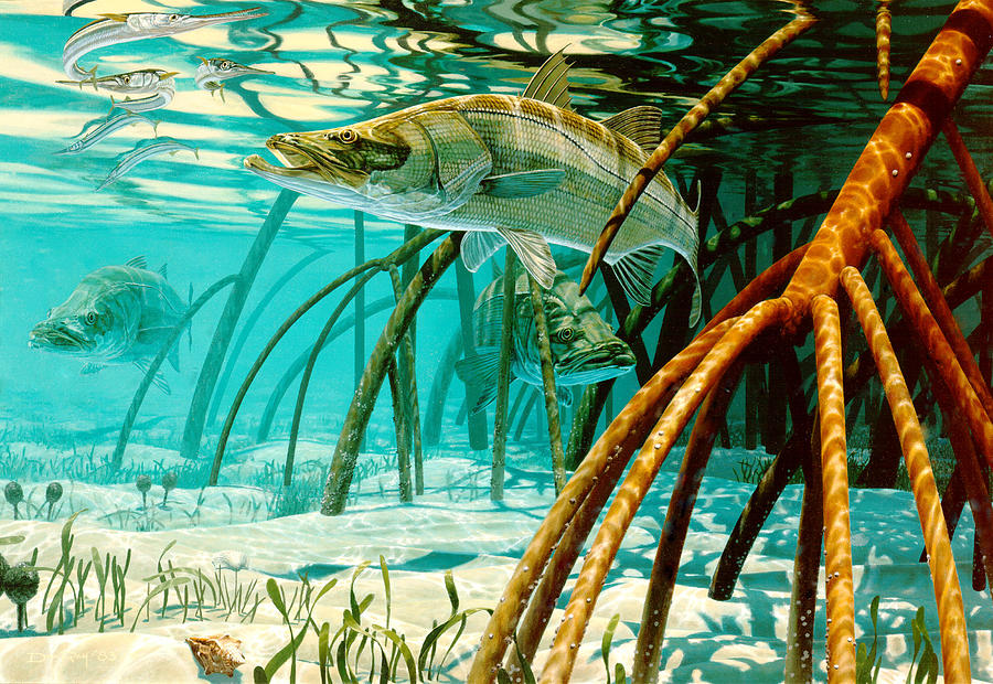 Snook In The Mangroves Painting