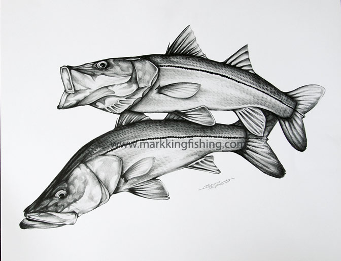 Tarpon Drawings Fishing Tackle And Gear For