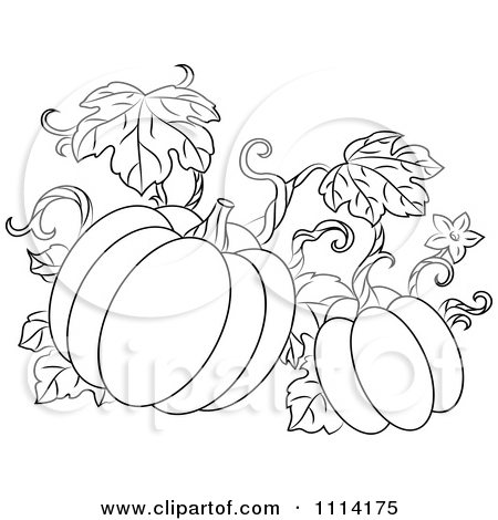 pumpkin with leaves coloring page - pumpkin vine black and white clipart clipart kid