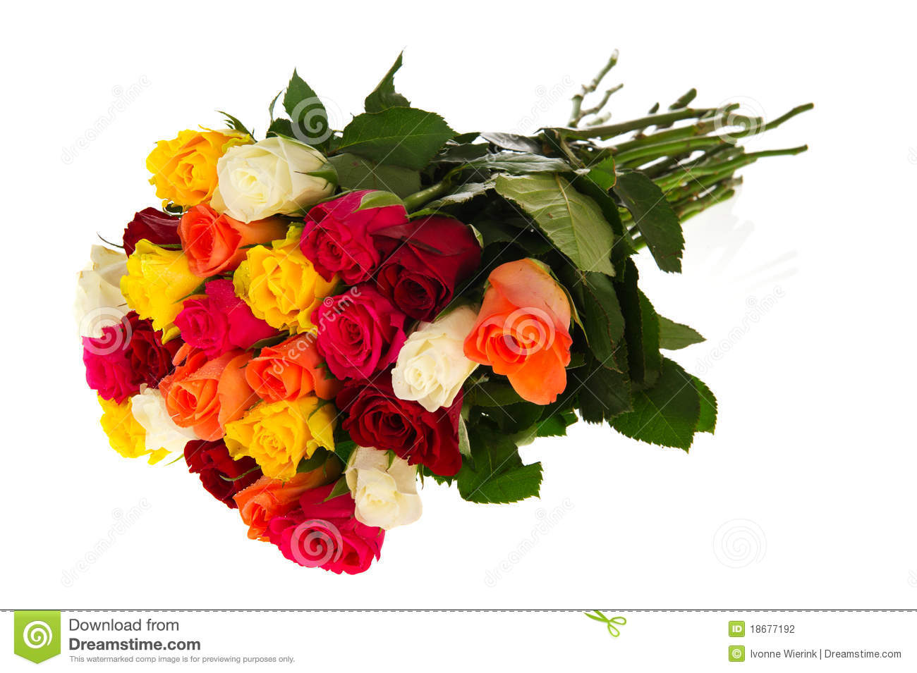 Colorful Bouquet Roses Stock Photography   Image  18677192