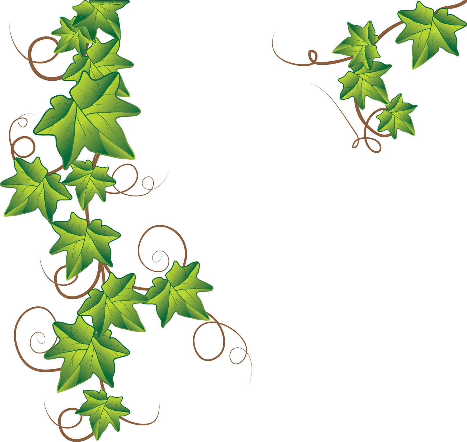 Pumpkin Vine Drawing Pumpkin Vine Clipart 13394451171289524118ivy Png