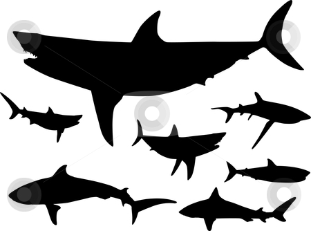 Shark Fin Outline   Clipart Panda   Free Clipart Images
