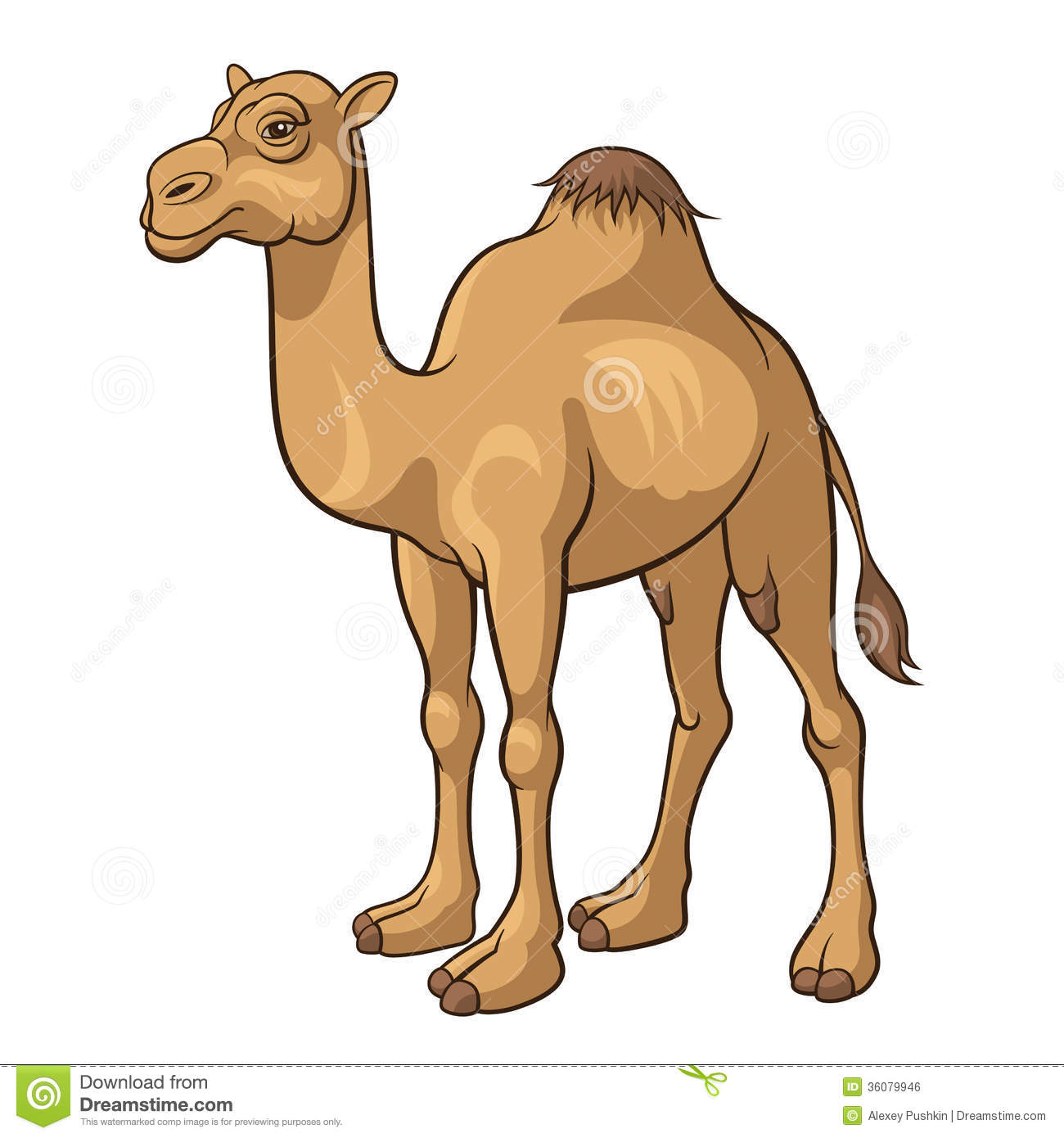 Cartoon Camel Isolated On A White Background Vector Illustration