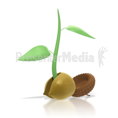 Acorn Sprout   Wildlife And Nature   Great Clipart For Presentations