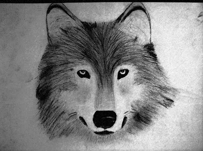 Pencil Drawings Of Wolves Wolf Drawing Sketched In Pencil