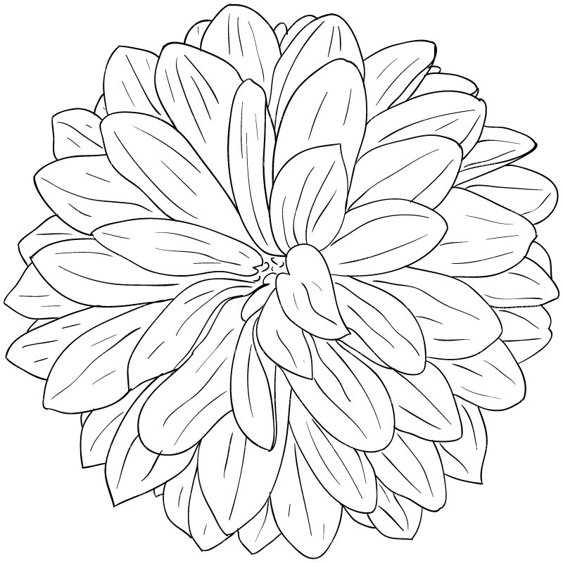 Clipart Dahlia Flower Sketch Style   Royalty Free Vector Design