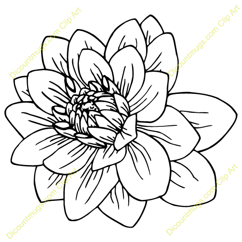 Dahlia Flower Line Drawing : Dahlia clipart suggest