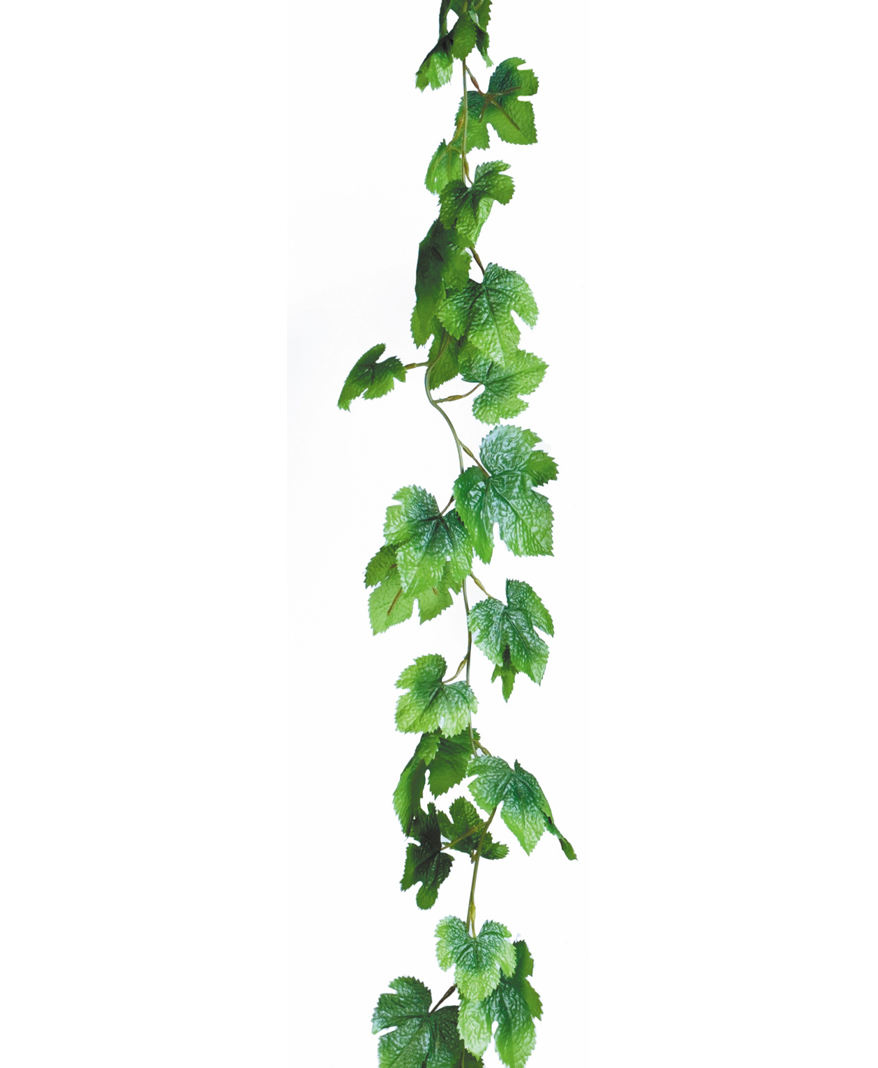 Ivy Vine   Free Cliparts That You Can Download To You Computer And