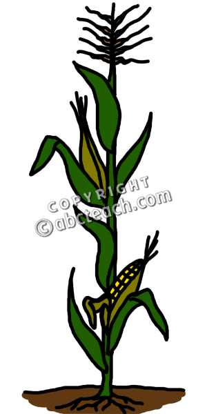 Clip Art Corn Stalk Clipart corn stalk clipart kid colouring pages