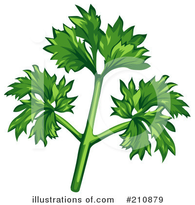 Herb Clipart  210879 By Dero   Royalty Free  Rf  Stock Illustrations