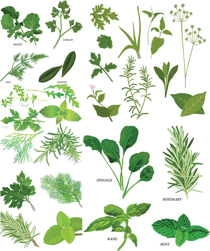 Herbal Vector Clipart 5 Sets With Different Vector Herbals And Greens