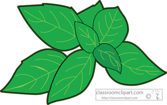 Herbs And Spice   Basil Herb 227   Classroom Clipart