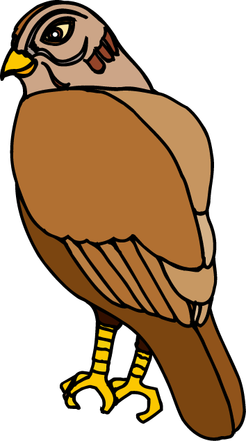 hawk clipart clipart suggest